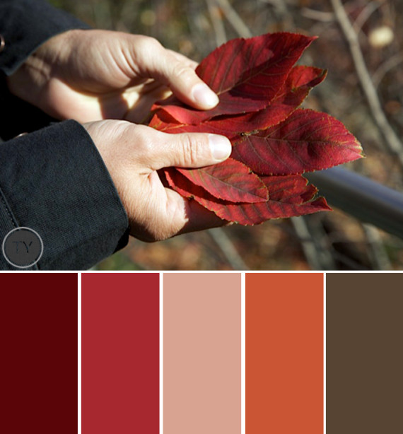 Fall for Autumn Color Palettes by Ty Pennington