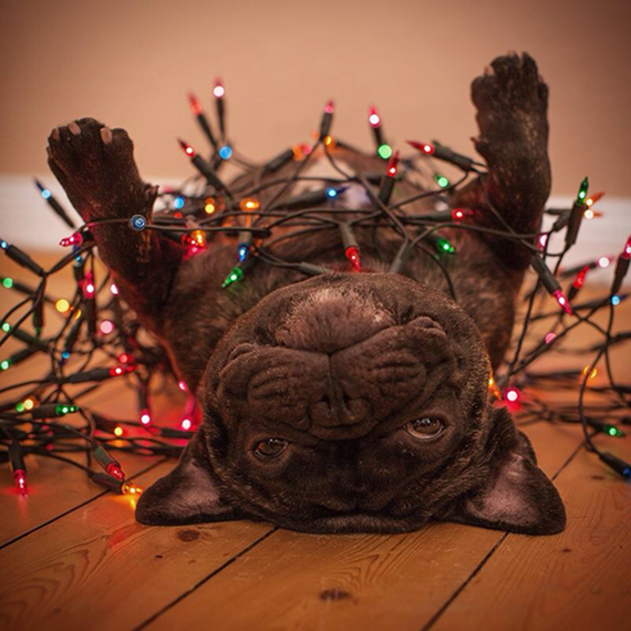 Festive pet with string lights | Ty Pennington's Favorite Winter Pins