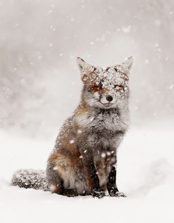 Snowy fox photography | Ty Pennington's Favorite Winter Pins