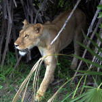 Night prowler | Ty Pennington's Tanzanian Dream