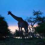 Long silhouette | Ty Pennington's Tanzanian Dream