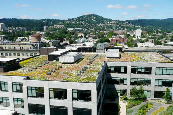 Go Green: Biophilic Cities and Communities by Ty Pennington