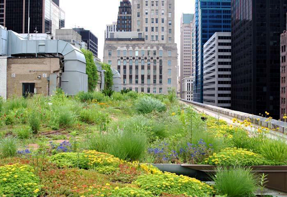 Chicago City Hall | Go Green: Biophilic Cities and Communities by Ty Pennington