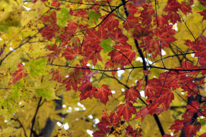 Fall Foliage by Ty Pennington