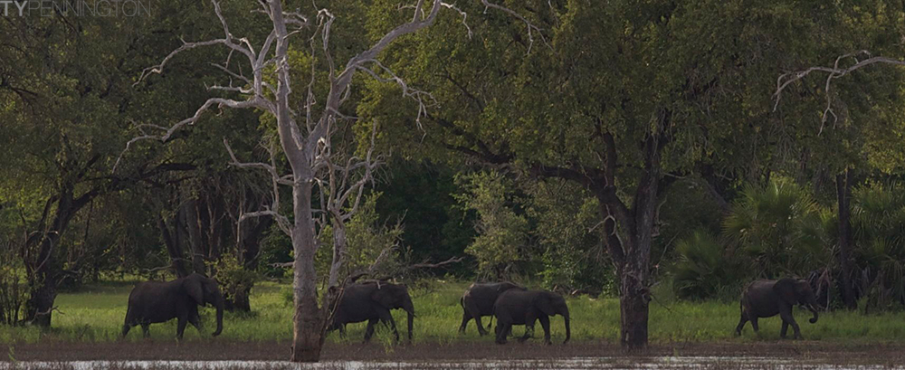 Elephants along the River Selous