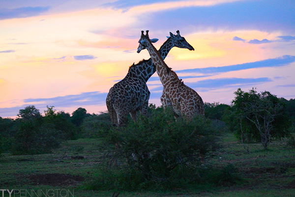 Long neck buds | Ty Pennington's Tanzanian Dream